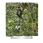 Silly Red-tailed Monkey Shower Curtain