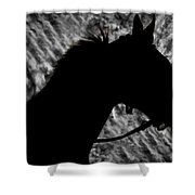 Silouette Of A Stallion Shower Curtain