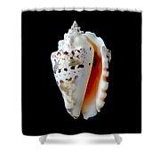 Silver Conch Seashell Shower Curtain