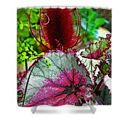 Silver Edged Rex Begonia Plant Art Prints Shower Curtain