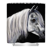 Grey Arabian Mare Painting Shower Curtain