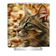 Silver Grey Tabby Cat Shower Curtain