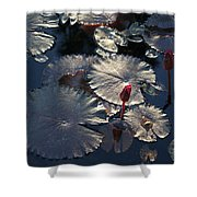 Silver Lilypads Shower Curtain