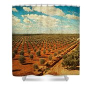 Silver Olive Trees In Andalusia. Spain Shower Curtain