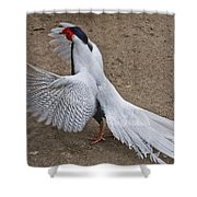 Silver Pheasant Shower Curtain