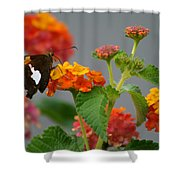 Silver-spotted Skipper Butterfly On Lantana Blossoms Shower Curtain