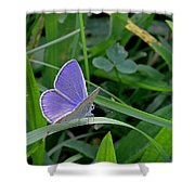 Silver Studded Blue Butterfly Shower Curtain