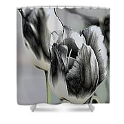 Silver Tulips Shower Curtain