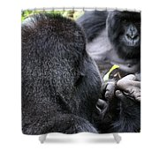 Silverback Grooming 1 Shower Curtain