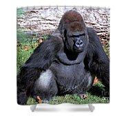 Silverback Western Lowland Gorilla Shower Curtain