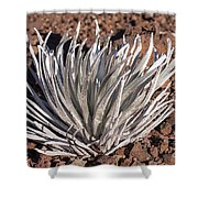 Silversword Leaves Shower Curtain