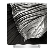 Silvertone Leaf Shower Curtain