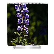 Silvery Lupine   #2 Shower Curtain