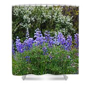 Silvery Lupine Black Canyon Colorado Shower Curtain