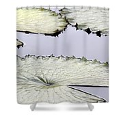 Silvery Sage Green Lily Pads Shower Curtain