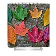 Similar But Different Shower Curtain by Frozen in Time Fine Art Photography