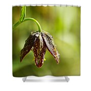 Simple Miracles Shower Curtain