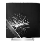 Simpliest Beauty - Bw Shower Curtain