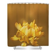 Simplistic Yellow Clover Flower  Shower Curtain