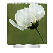 Simply Beautiful Shower Curtain