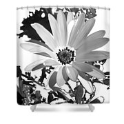 Simply Black And White Shower Curtain
