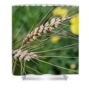 Simply Dried Grass Shower Curtain