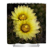 Simply Golden Cactus Flowers  Shower Curtain