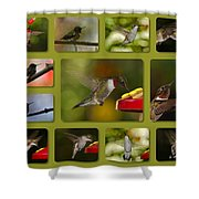 Simply Sipping Shower Curtain