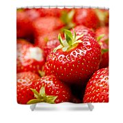 Simply Strawberries Shower Curtain