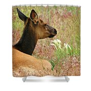 Simply Summer Shower Curtain