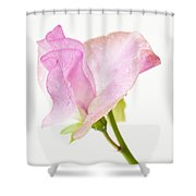 Simply Sweet Pea Shower Curtain