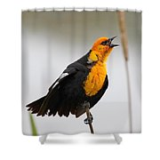 Sing A Song Shower Curtain
