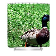 Singer In Life  Shower Curtain