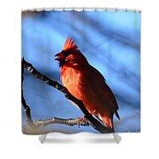 Singing Cardinal Shower Curtain