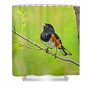 Singing Eastern Towhee Shower Curtain