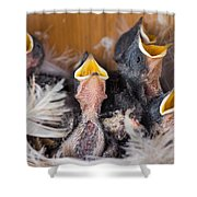 Singing For Supper Shower Curtain by Bill Pevlor