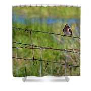 Singing Shower Curtain