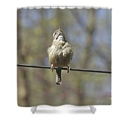 Singing His Heart Out - Carolina Wren - Thryothorus Ludovicianus Shower Curtain