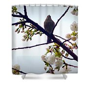 Singing Of Spring Shower Curtain