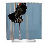 Blackbird Melody Shower Curtain