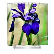 Single And Beautiful Shower Curtain