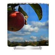 Single Apple Shower Curtain