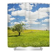 Single Apple Tree In Maine Blueberry Field Shower Curtain