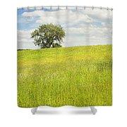Single Apple Tree In Maine Hay Field Shower Curtain