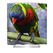Single Beauty Shower Curtain