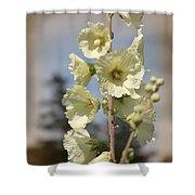 Single Buttercream Hollyhock Shower Curtain