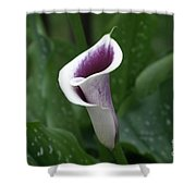 Single Calla Shower Curtain