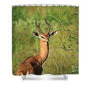 Single Grant's Gazelle Shower Curtain