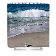 Single Seagull On The Beach Shower Curtain