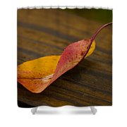 Single Leaf Shower Curtain